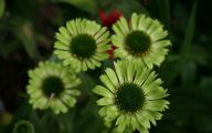 Green Flowers Images And Names  14 Free Hd Wallpaper