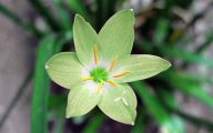Green Flowers Images And Names  18 Cool Hd Wallpaper
