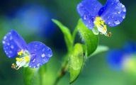 Green Flowers In Summer  13 Desktop Wallpaper