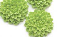 Green Flowers In Summer  14 Wide Wallpaper