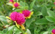 Green Flowers In Summer  17 Hd Wallpaper