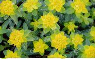 Green Flowers In Summer  18 Free Hd Wallpaper