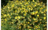 Green Flowers In Summer  8 Desktop Wallpaper