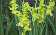 Green Gladiolus 10 Free Hd Wallpaper