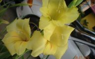 Green Gladiolus 16 Free Wallpaper