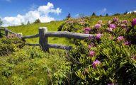 Green Hills Flowers  10 Widescreen Wallpaper