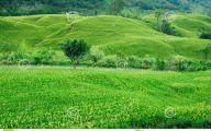 Green Hills Flowers  11 Desktop Wallpaper