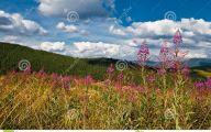 Green Hills Flowers  14 Widescreen Wallpaper