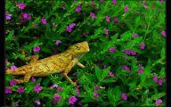 Green Hills Flowers  27 Desktop Wallpaper