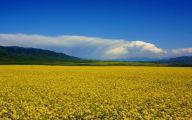 Green Hills Flowers  6 Desktop Wallpaper