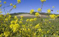 Green Hills Flowers  7 Hd Wallpaper