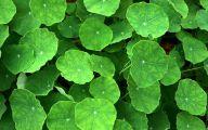 Green Leafy Flowers  29 Widescreen Wallpaper