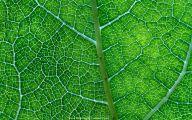 Green Leafy Flowers  31 Wide Wallpaper