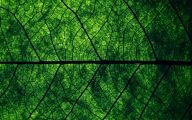 Green Leafy Flowers  6 Widescreen Wallpaper