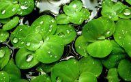 Green Leafy Flowers  7 Wide Wallpaper