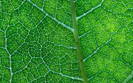 Green Leafy Flowers  8 Cool Wallpaper