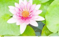 Green Lotus Flowers  12 Desktop Wallpaper