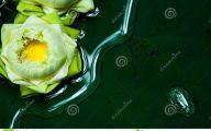 Green Lotus Flowers  7 Background