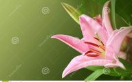 Pink Exotic Flowers Pictures  11 Background