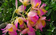 Pink Exotic Flowers Pictures  19 High Resolution Wallpaper