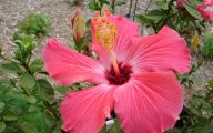Pink Exotic Flowers Pictures  20 Background