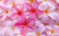 Pink Exotic Flowers Pictures  21 High Resolution Wallpaper