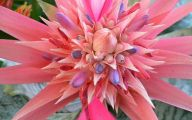 Pink Exotic Flowers Pictures  23 Desktop Background