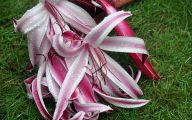 Pink Exotic Flowers Pictures  25 Widescreen Wallpaper