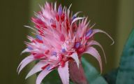Pink Exotic Flowers Pictures  28 Wide Wallpaper