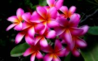 Pink Exotic Flowers Pictures  33 Desktop Background