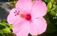 Pink Exotic Flowers Pictures  34 Cool Wallpaper