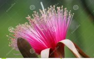 Pink Exotic Flowers Pictures  35 Desktop Wallpaper