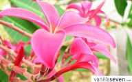 Pink Exotic Flowers Pictures  5 Wide Wallpaper