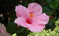 Pink Exotic Flowers Pictures  8 Background