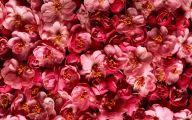 Pink Flowers Hd Wallpapers  1 Desktop Background