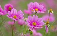 Pink Flowers Hd Wallpapers  18 Widescreen Wallpaper