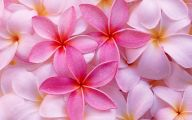 Pink Flowers Hd Wallpapers  20 Cool Wallpaper