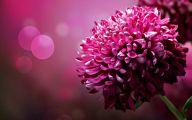 Pink Flowers Hd Wallpapers  22 Free Hd Wallpaper