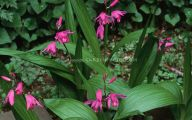 Pink Flowers Large Leaves  12 Widescreen Wallpaper