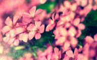 Pink Flowers Large Leaves  23 High Resolution Wallpaper