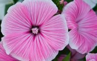 Pink Flowers Large Leaves  27 Free Hd Wallpaper