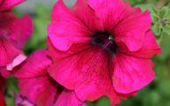 Pink Flowers Large Leaves  29 Cool Wallpaper