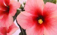 Pink Flowers Large Leaves  3 Desktop Wallpaper