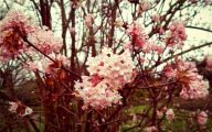 Pink Flowers Long Green Leaves  18 High Resolution Wallpaper