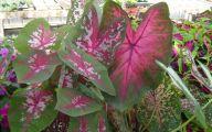 Pink Flowers Long Green Leaves  5 Widescreen Wallpaper
