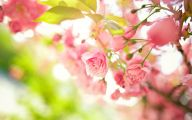 Pink Flowers Picture  1 Hd Wallpaper