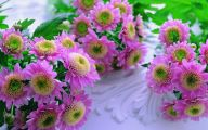 Pink Flowers Picture  2 Widescreen Wallpaper