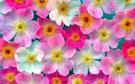 Pink Flowers Picture  3 Background