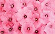 Pink Flowers Picture  4 Background Wallpaper