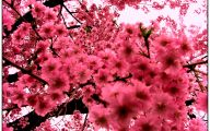 Pink Flowers Picture  7 Cool Hd Wallpaper